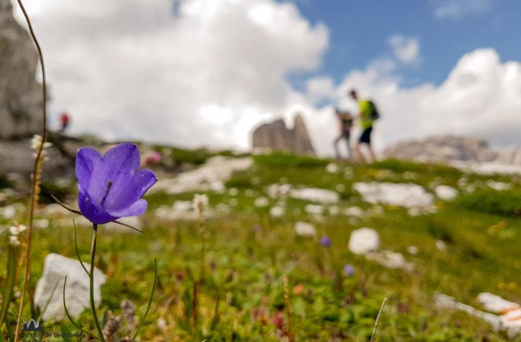 Wandern - camminate - hiking Alpinschule Drei Zinnen Tre Cime-10